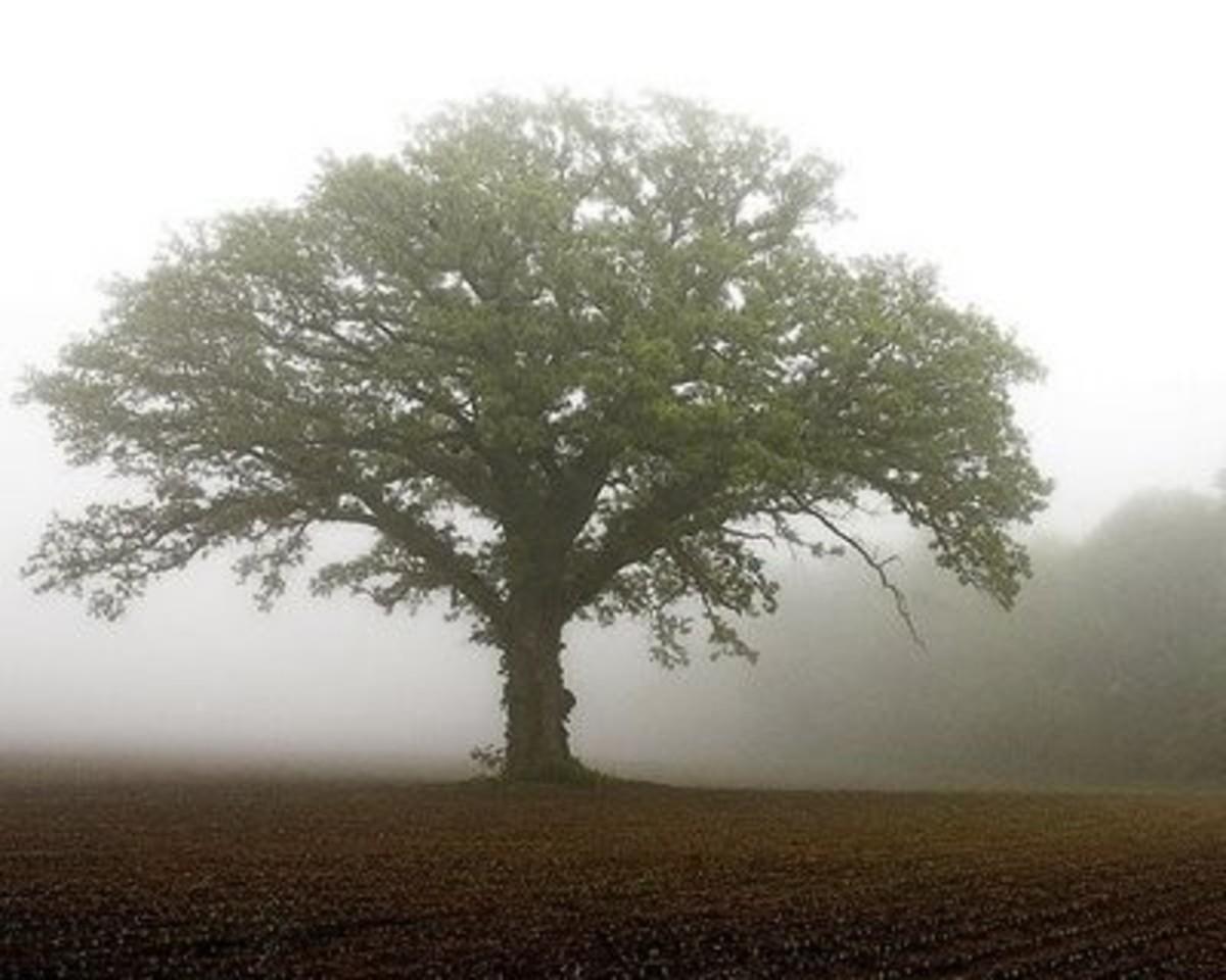Little seed, huge tree.