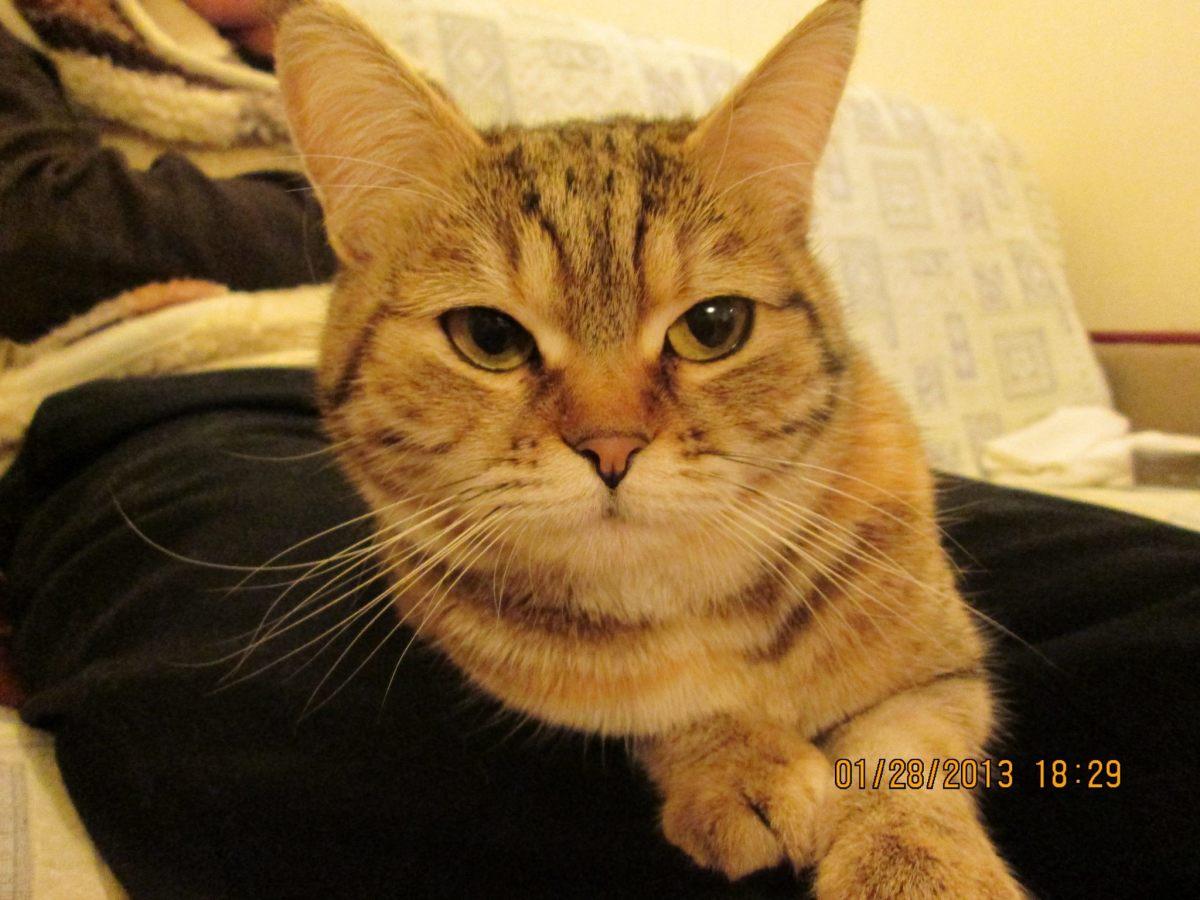 Closeup of my ex girlfriend's grandmother's kitty friend
