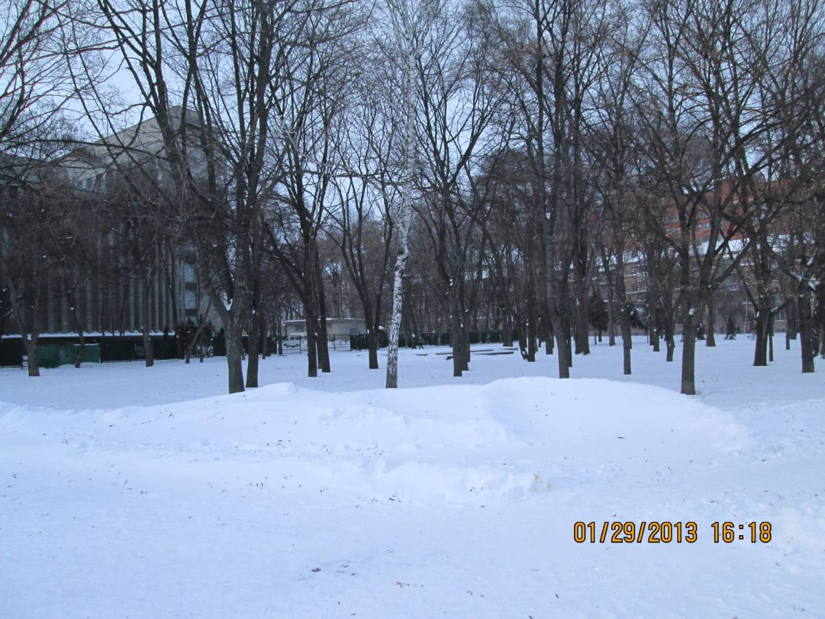 A photo including a birch tree in the Dnipropetrovsk Province of the Ukraine