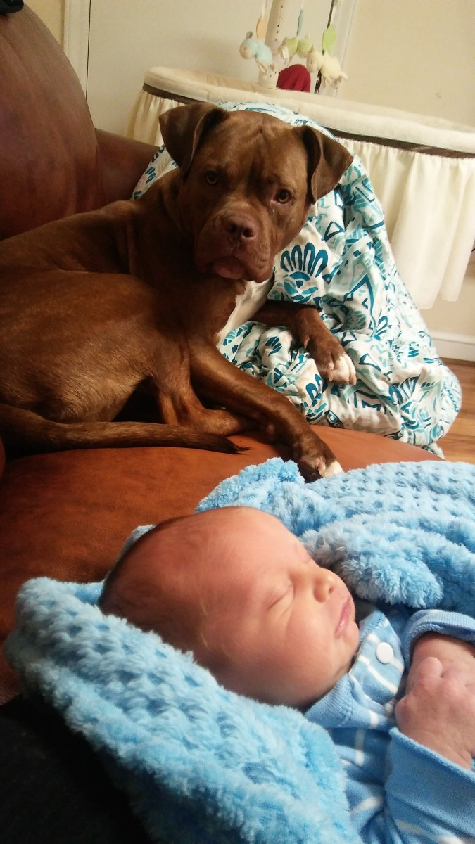 Daizy and 1 month old Liam
