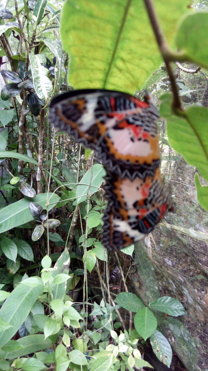 poem-for-a-butterfly