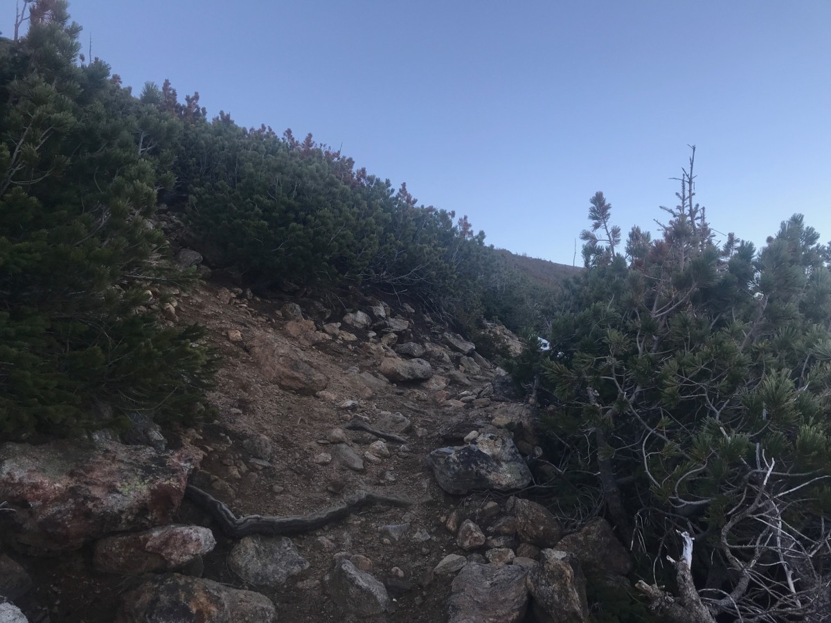 hiking-up-a-mountain-my-dog-and-i-an-adventure