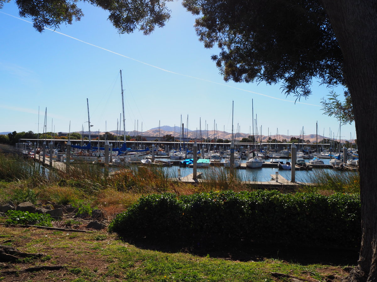 Sailboats at dock, Antioch, CA marina; Mt. Diablo visible in the far center distance