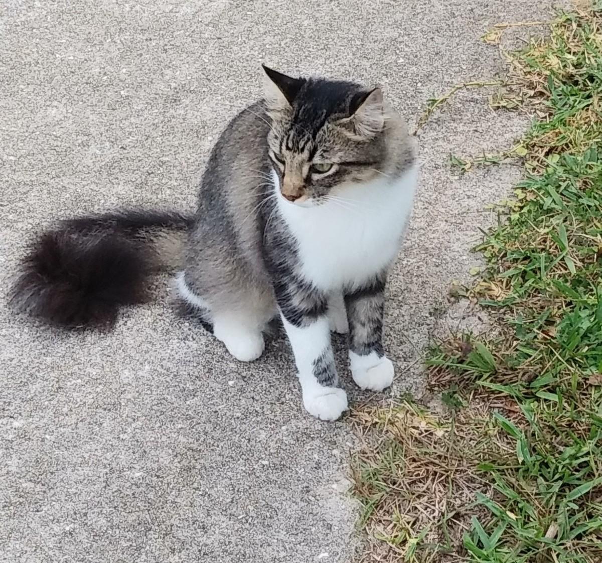 My Little Kitty