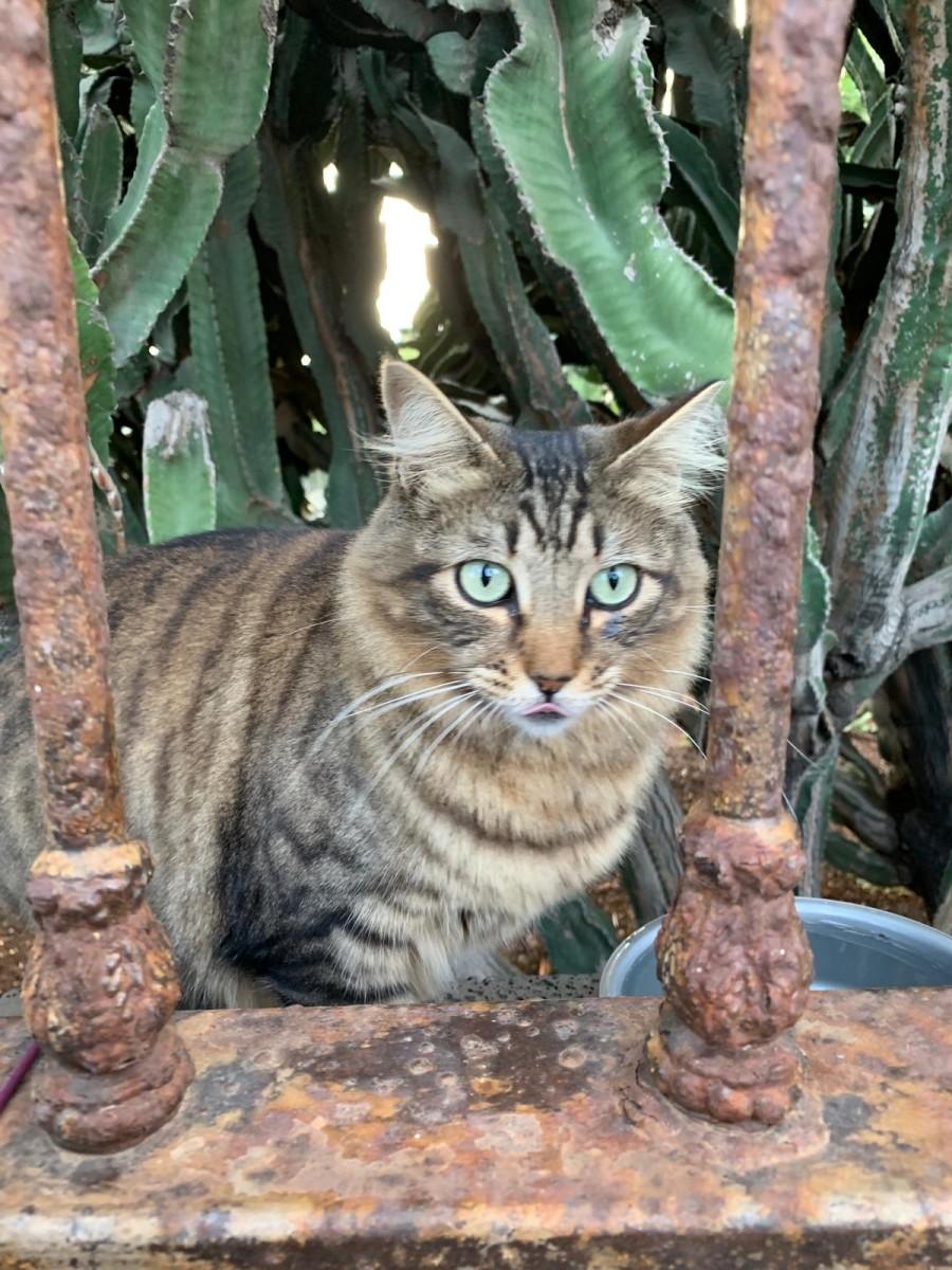 feral-cats-of-playa-blanca-lanzarote-part-five