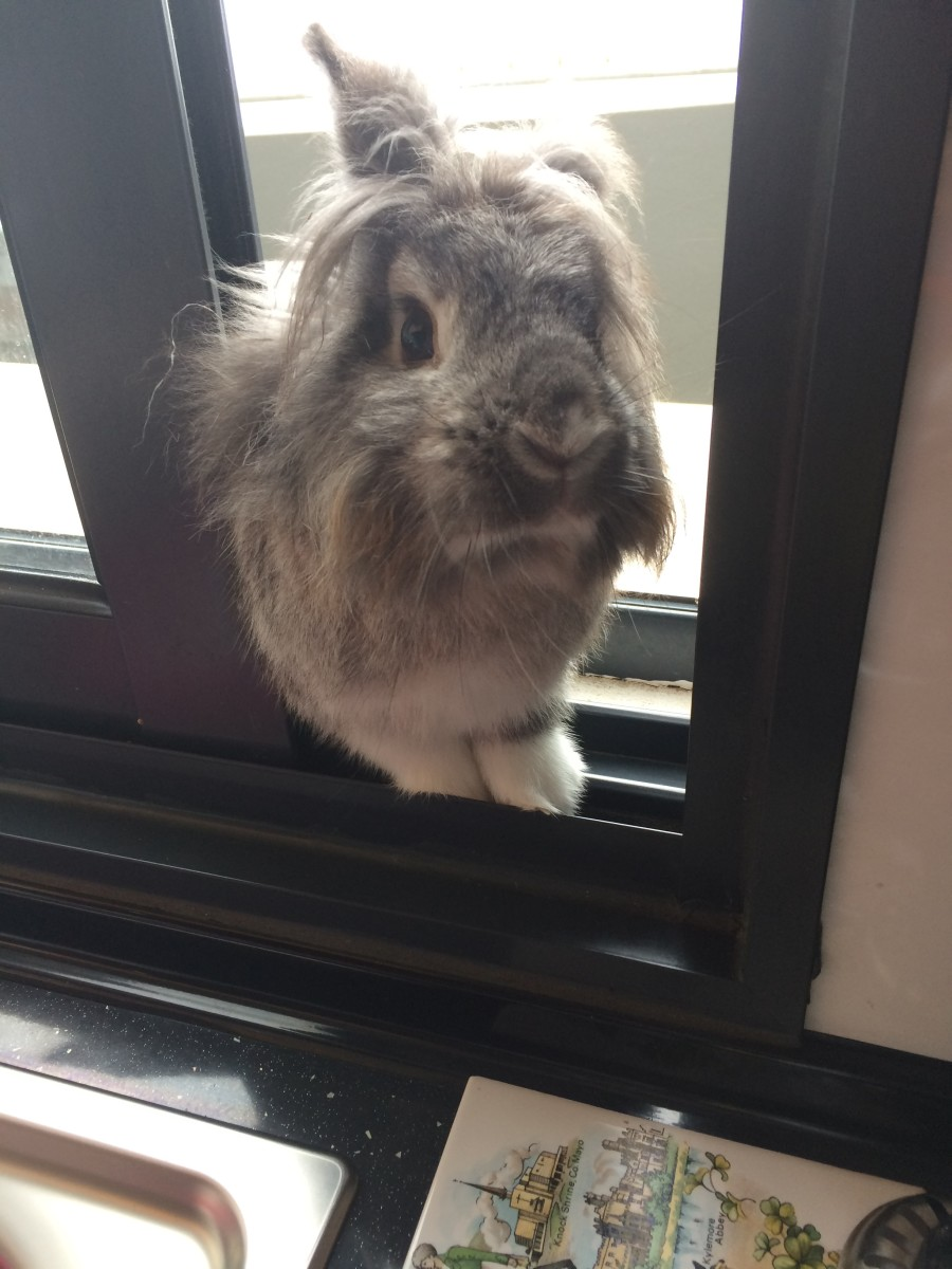 The Bunny Intruder