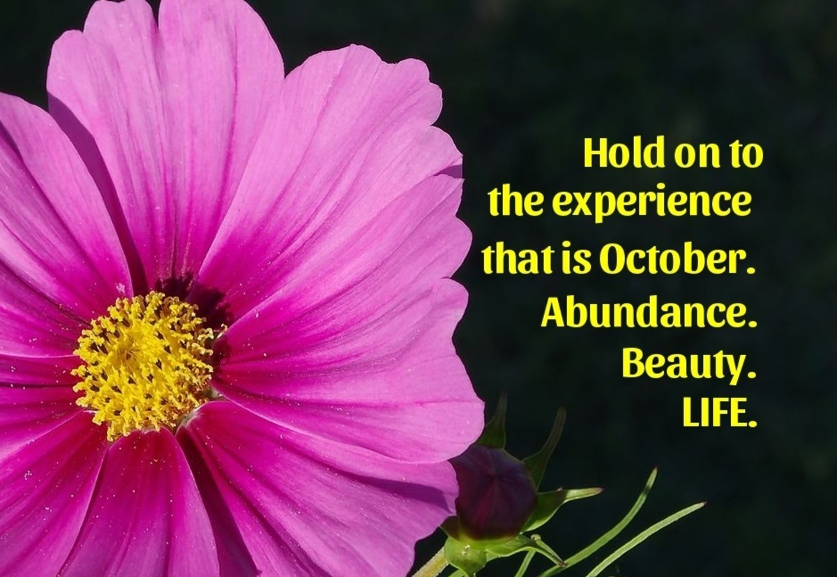 The cosmos is the other birth flower of October.
