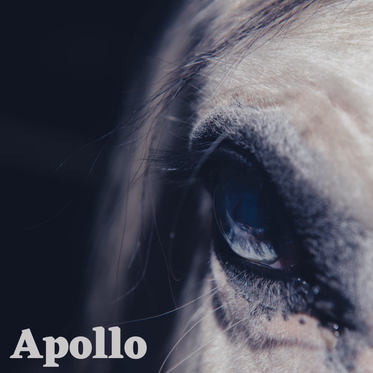 Apollo would make a great name for silver horse with a kind temperment.