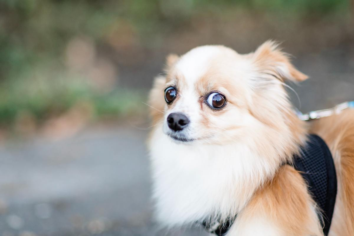 What to Do If Your Dog Doesn't Like Your Boyfriend