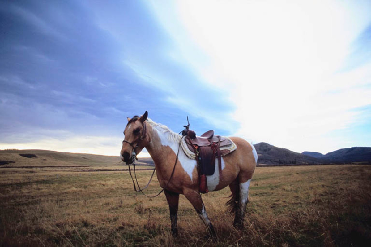 It is better to loose your horse than your life, so make sure you let go of your reigns on the way down.
