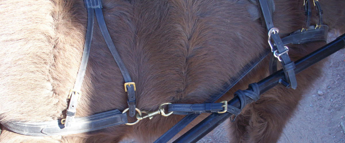 A sturdy snap is a must! If any competing is to be done, the snap must match the harness. If the buckles, etc. on the harness are brass, the snap should be brass. If they are stainless, so should be the snap.