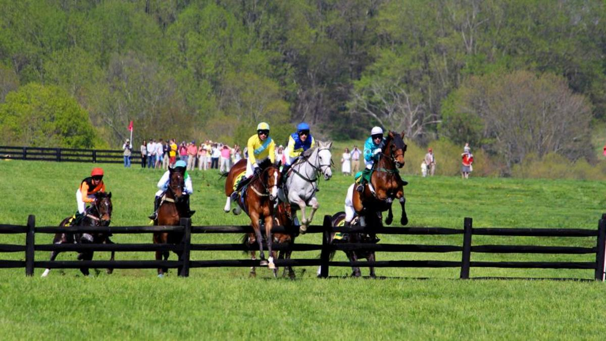 A steeplechase is a cross country horse race, where participants must jump numerous wooden rail hurdles, called timbers