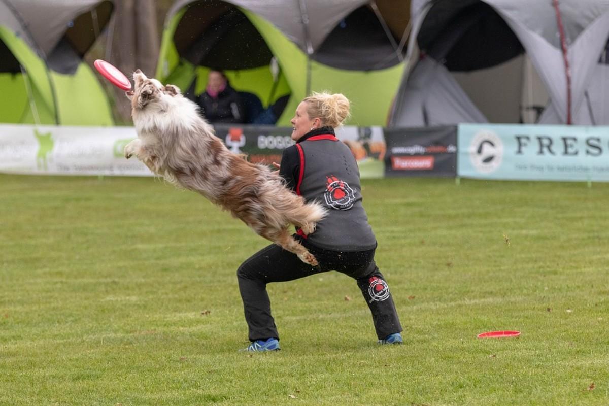 Dog frisbee game