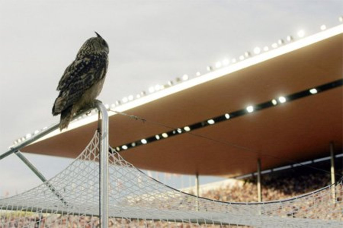 The iconic moment in Finland's Euro 2008 campaign occurred on June 2, 2007. Later named Bubi, an eagle owl inside Helsinki's Olympiastadion, delays a Euro 2008 qualifier between Finland and Belgium.