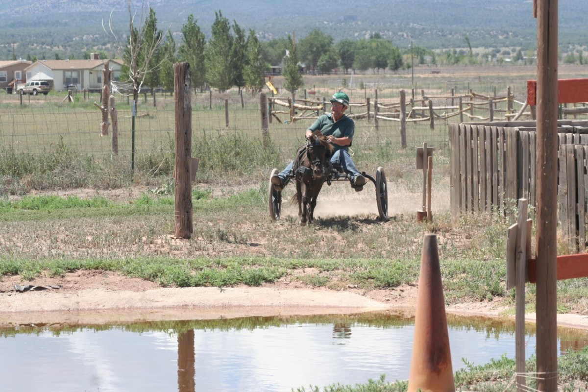 PJ coming in to a water obstacle. At the Training level, there is always a way around the water. PJ is working at the next level up and must navigate through the water. At this level, he may canter, and is enjoying the faster pace.