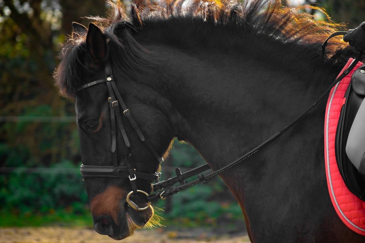 A Gorgeous Lesson Horse