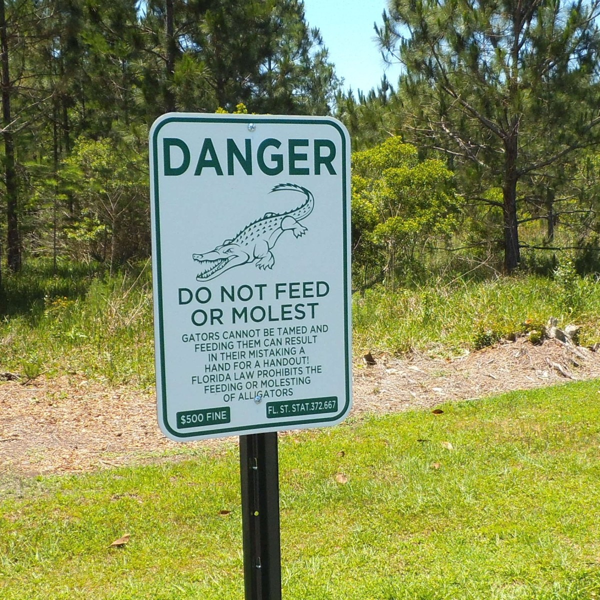 Always stay away from alligators.
