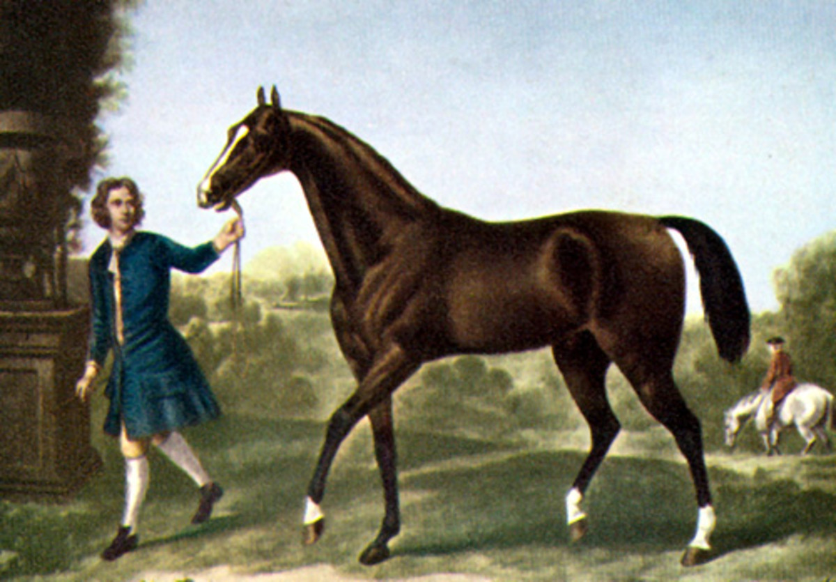 The Darley Arabian was one of a trio of horses from which all thoroughbreds are descended.
