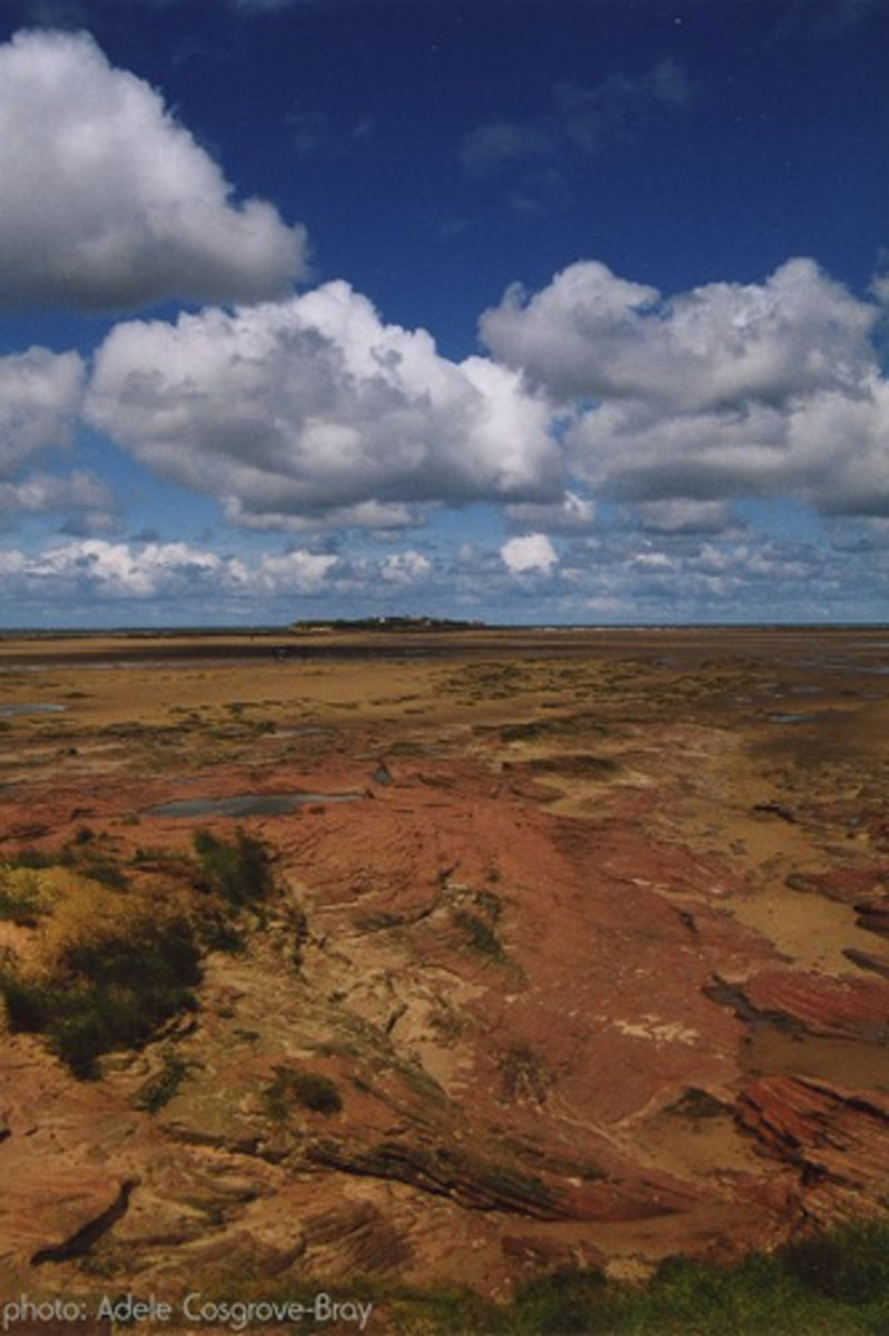 Red Bunter sandstone stretching from Middle Eye to Hilbre.