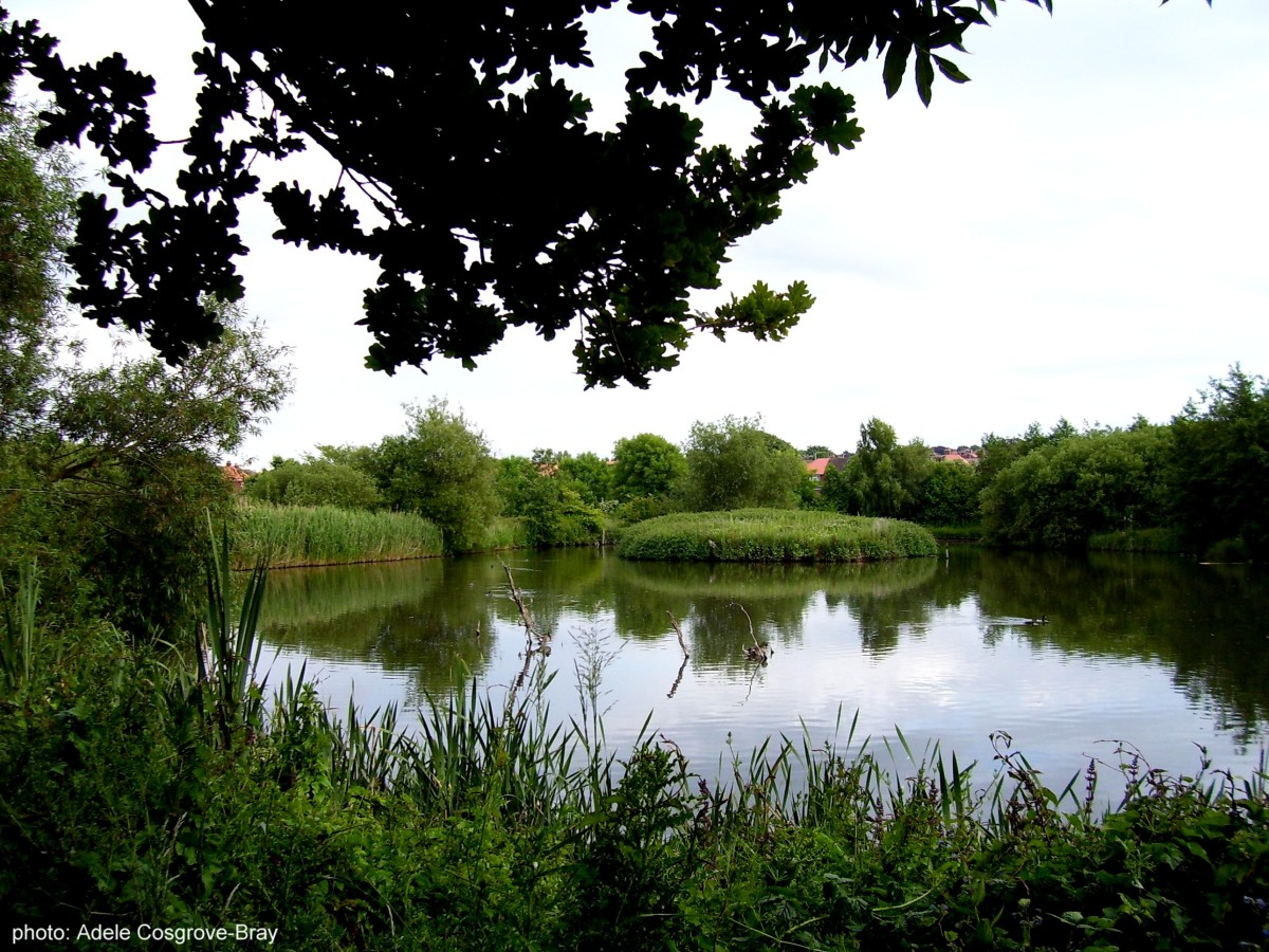 Herons, ducks and geese live alongside water voles and common brown bats.