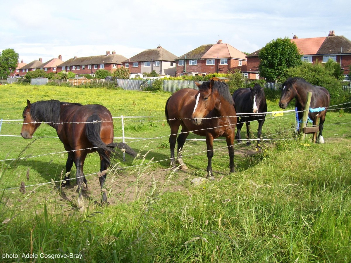 Horses grazing by the park entrance.