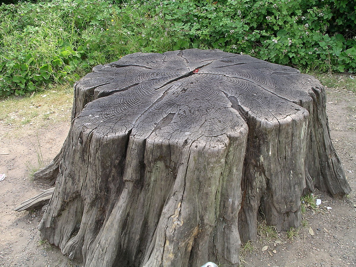 the-master-and-the-stump