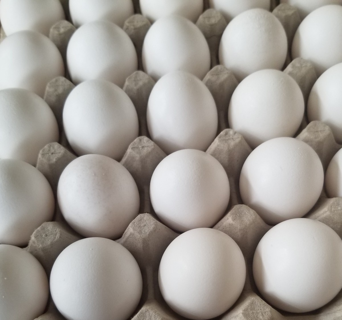 Eggs are versatile and cheap. Adding them to  lunch or dinner menu may be a profitable decision.