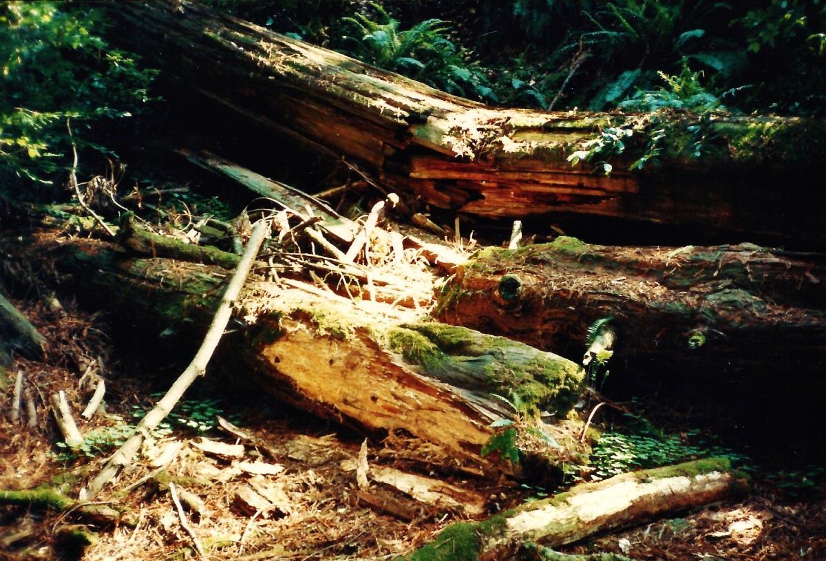 Fallen trees are allowed to decompose naturally.