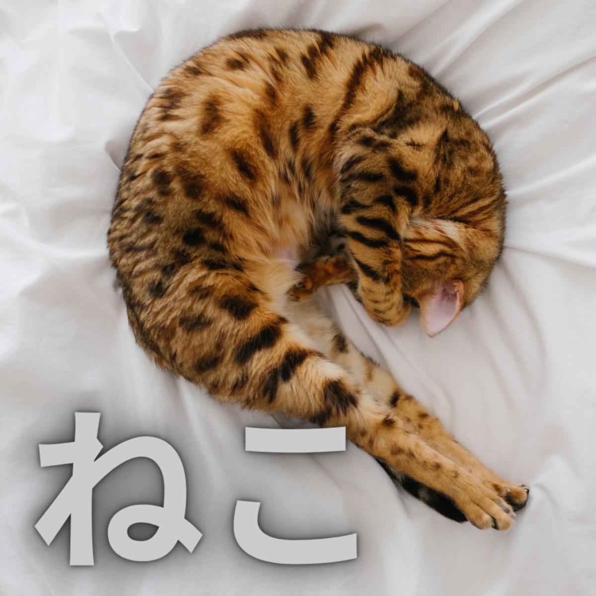 Neko or Cat