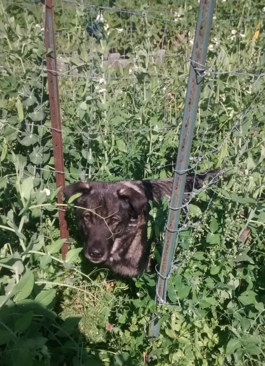 Our dog the pea patch