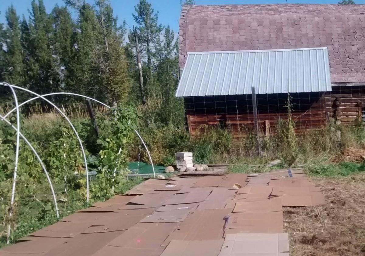 Cardboard base for a straw mulch