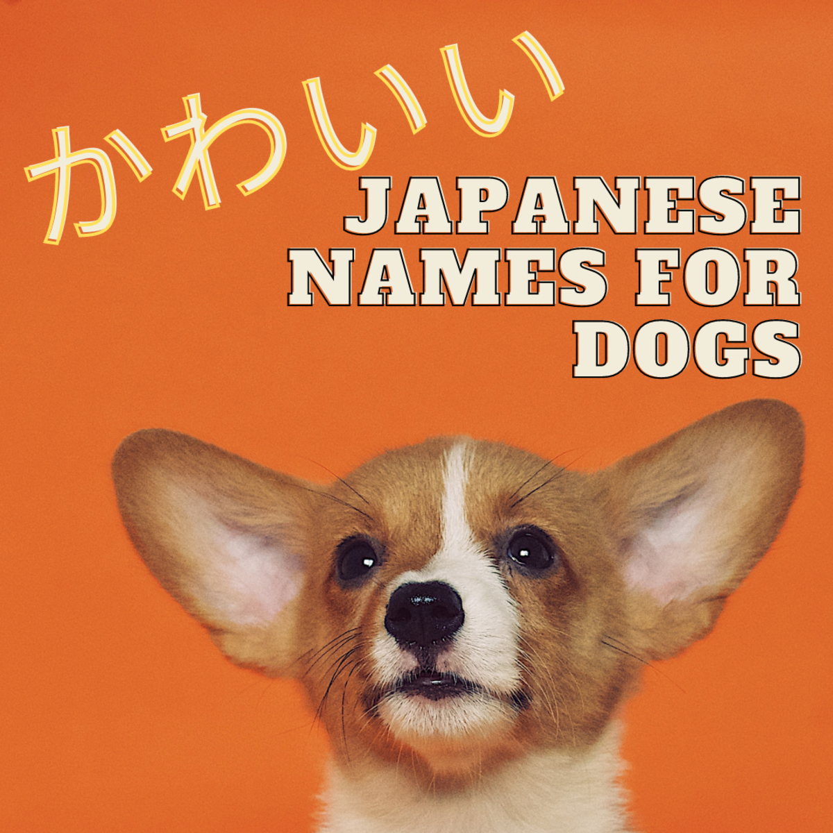 Cute and Cool Japanese Names for Dogs