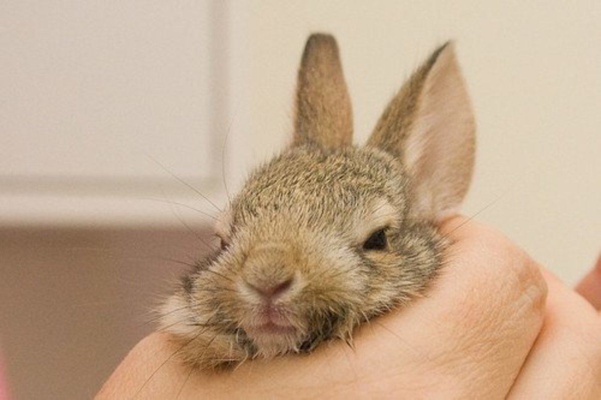 causes-of-sudden-death-in-pet-rabbits