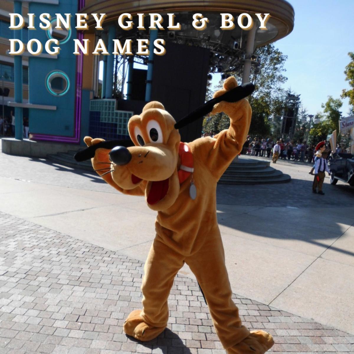 Disney Girl and Boy Dog Names
