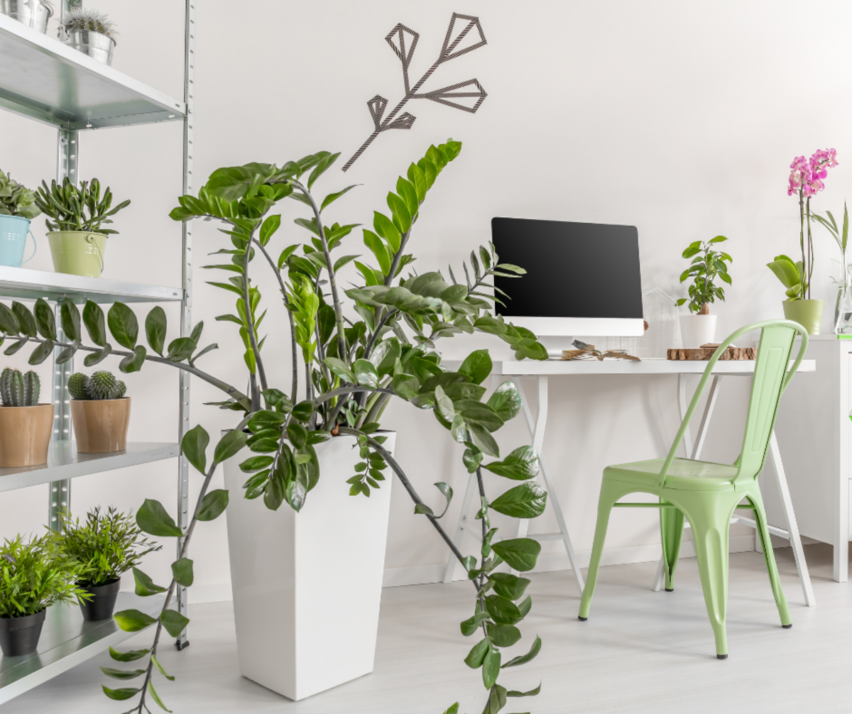 7 Pet-Friendly Indoor Plants to Start Using in Your Home Today for Cleaner Air Tomorrow