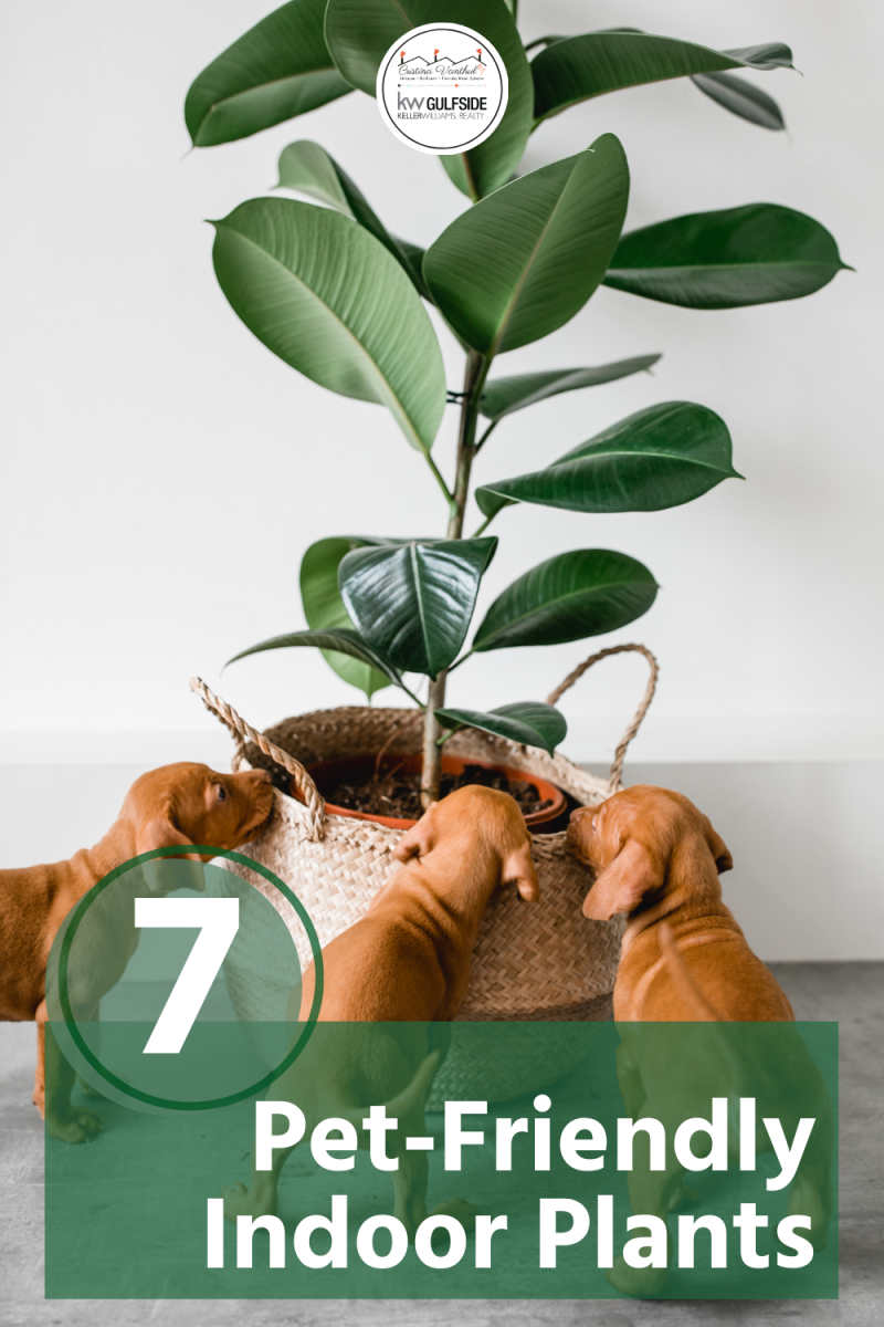 There are many dog-safe house plants and cat-safe indoor plants that add greenery and beauty to your home while helping to clean the air and keep your indoor air quality high.