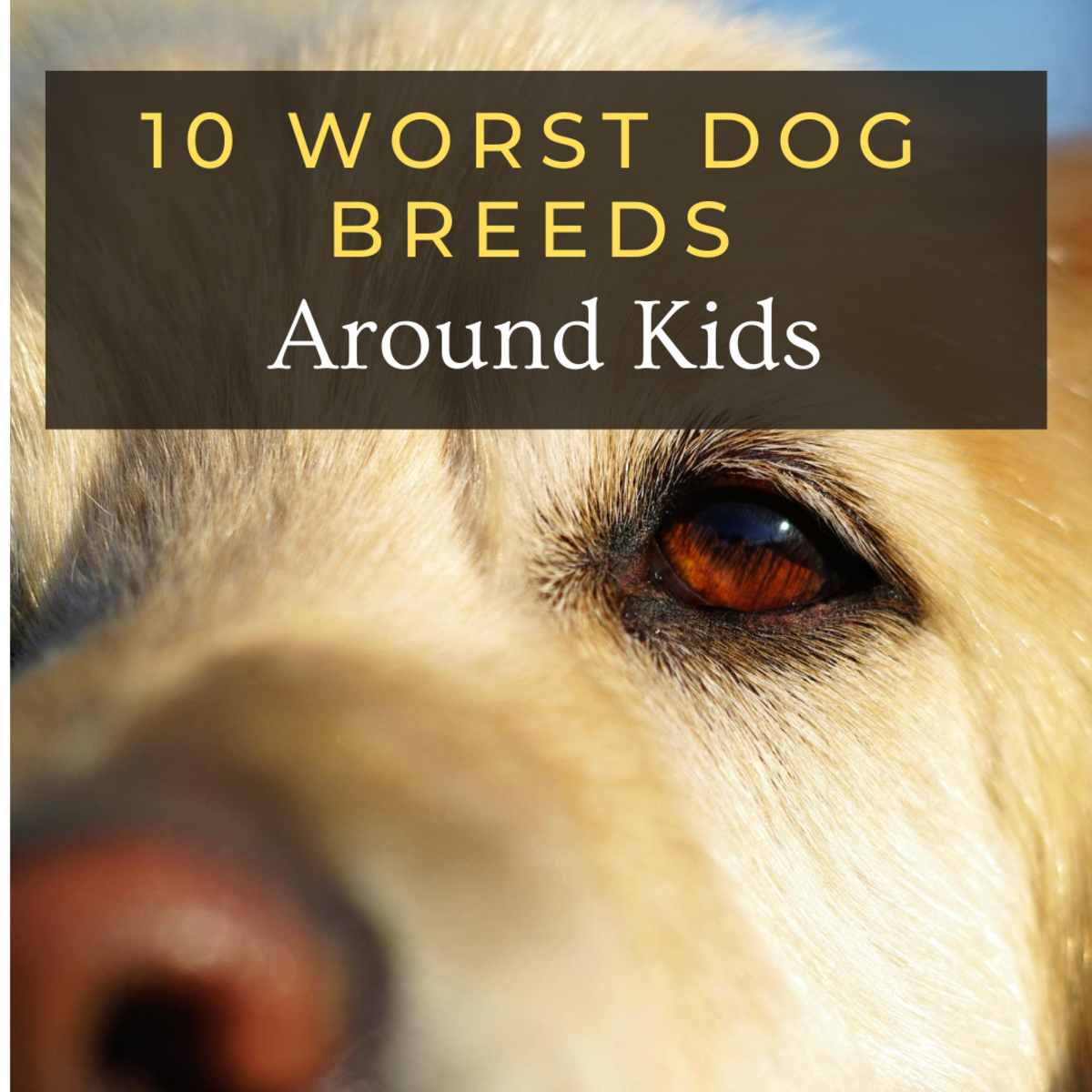 10 Worst Dog Breeds Around Kids