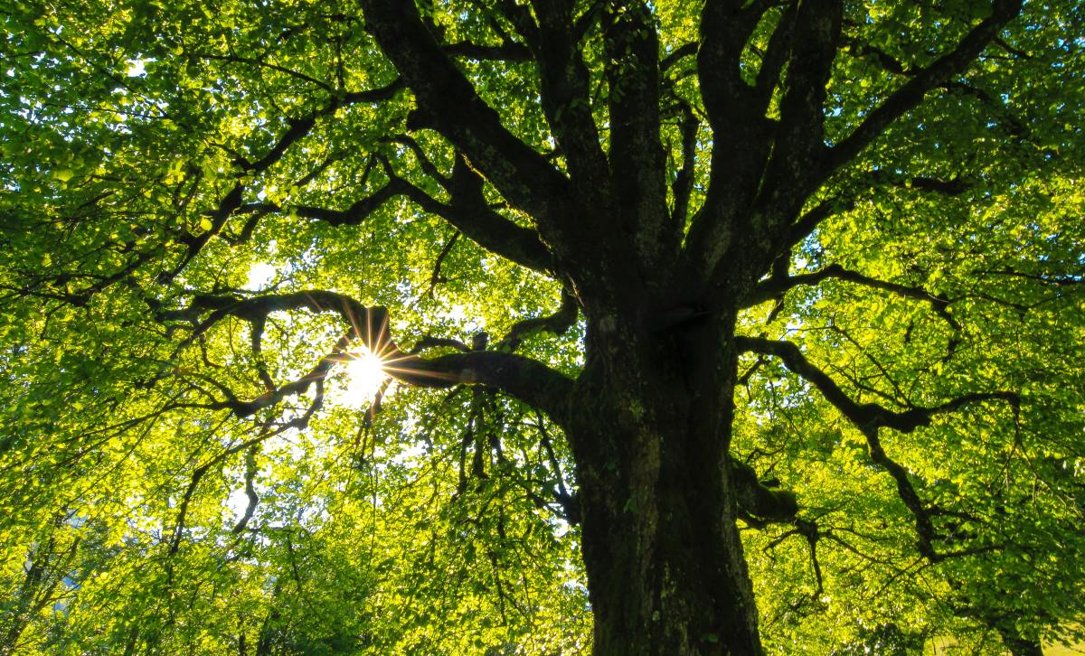 100-best-songs-about-trees