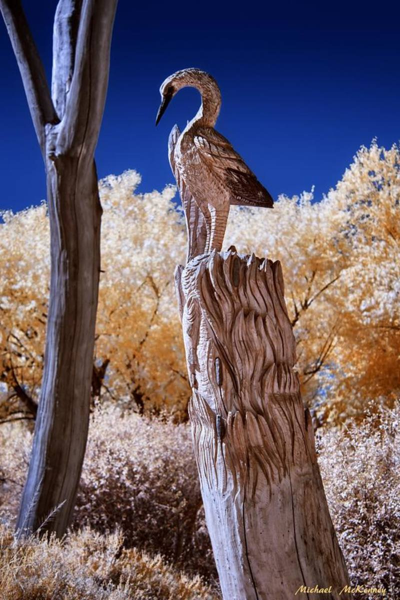 This chainsaw carving of a crane represents many animals that were displaced or destroyed as a result of the 2003 fire.