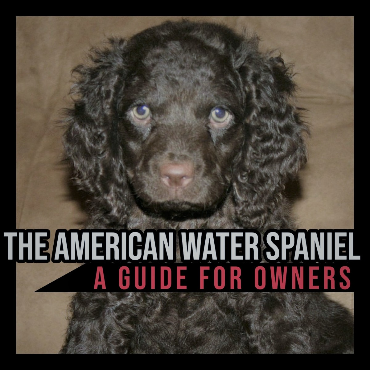 The American Water Spaniel: A Guide for Owners.