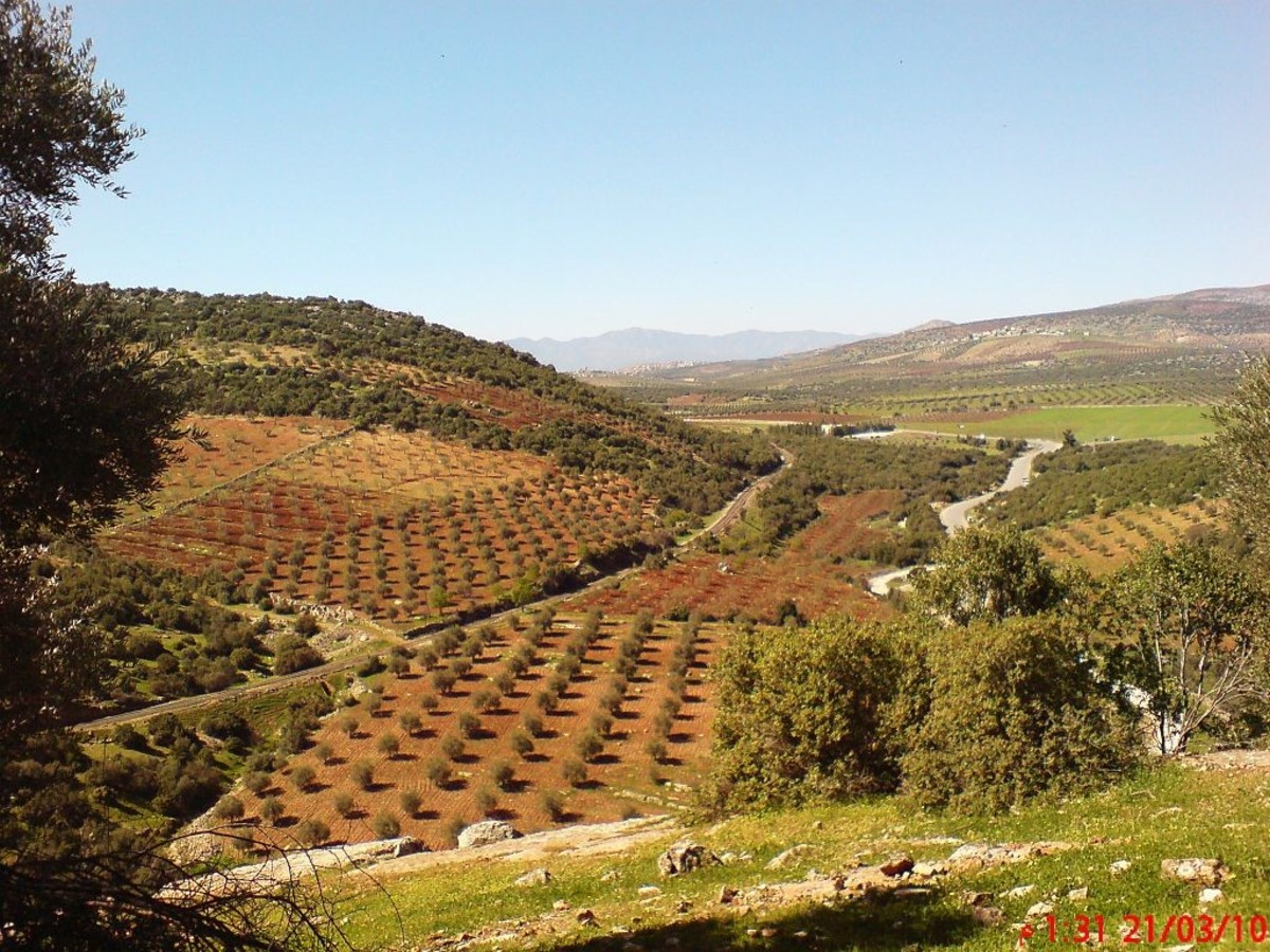 """fields in northern Syria, repurposed as part of the Bookchinite Internationalist Commune of Rojava's """"Make Rojava Green Again"""" campaign"""