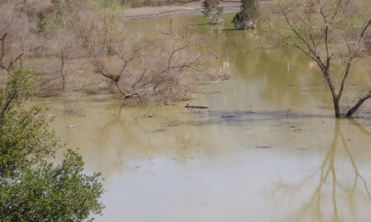 The porous soil behind Devil's Gate Dam allowed for rainwater to sink down into the aquifer. It also became a haven for herons (like the one in the center of the photo) and other waterfowl.