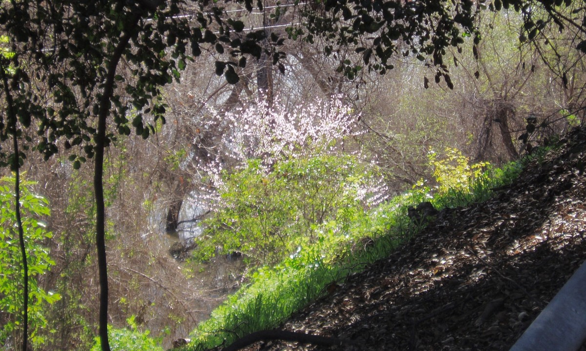 The shady paths of the watershed gave us unexpected views of flowering trees and other beauties.