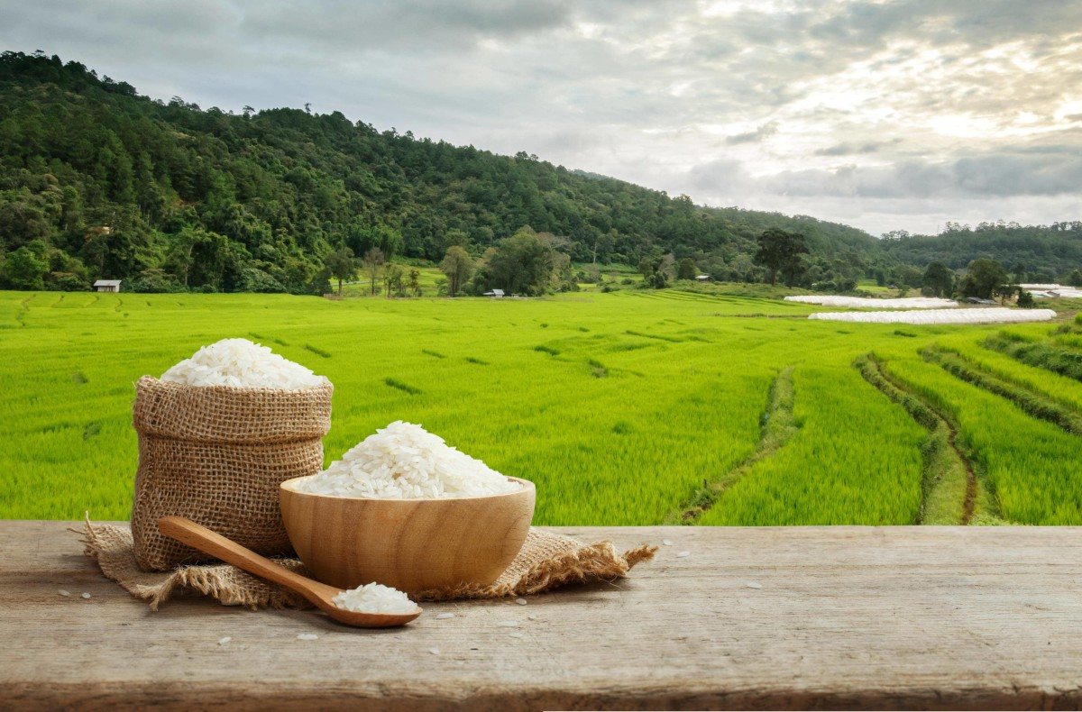 "Rice is so important in Thailand that food itself is commonly referred to as either ""rice"" or ""with rice."""