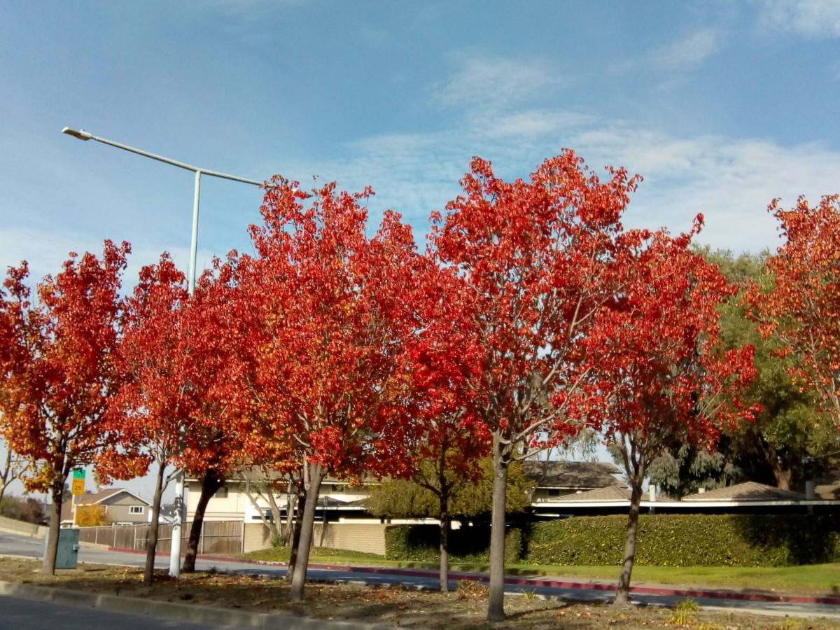 Seasons change, and so does the scenery
