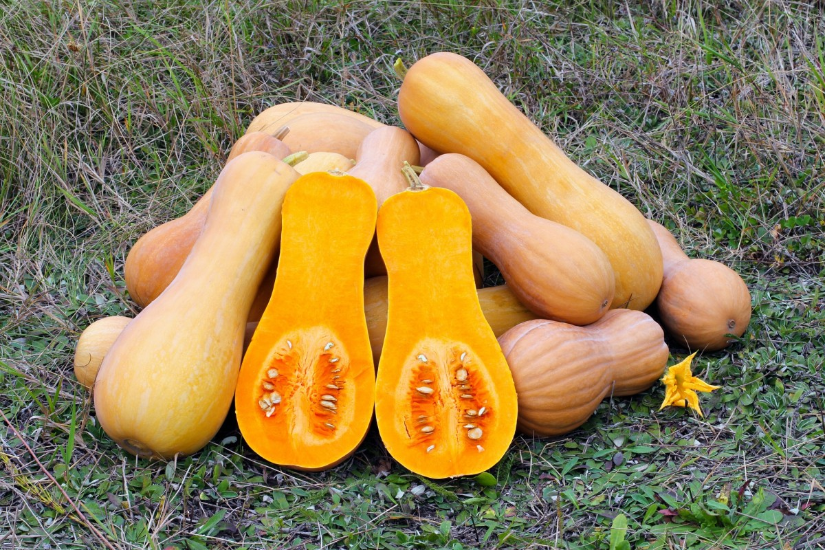 Butternut squash can be incorporated into side dishes, soups, stews, and salads.