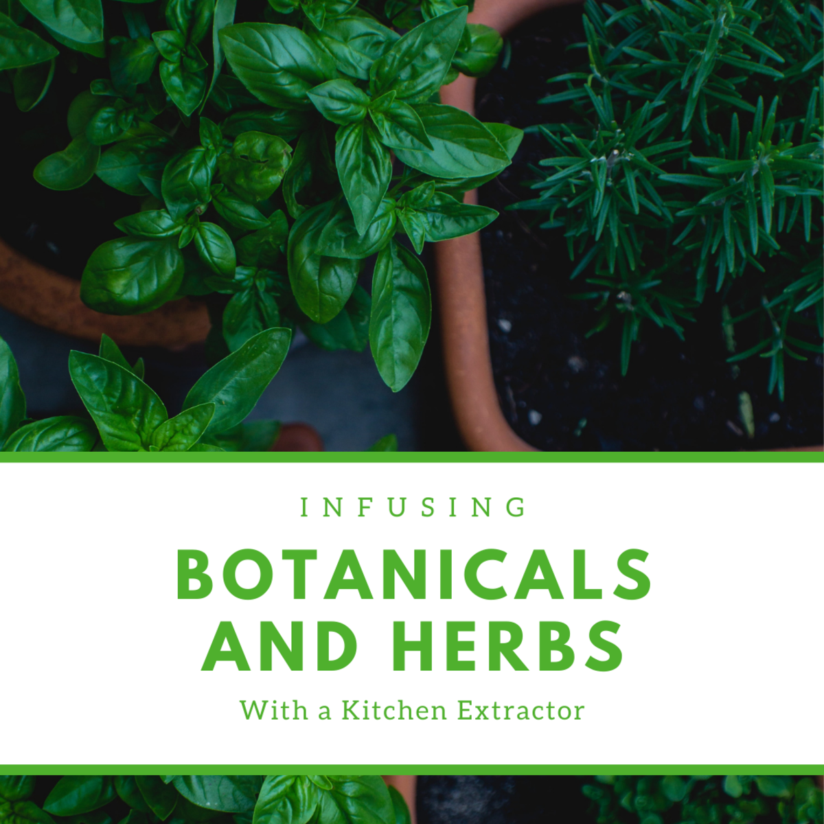Infuse your own botanicals and herbs at home!