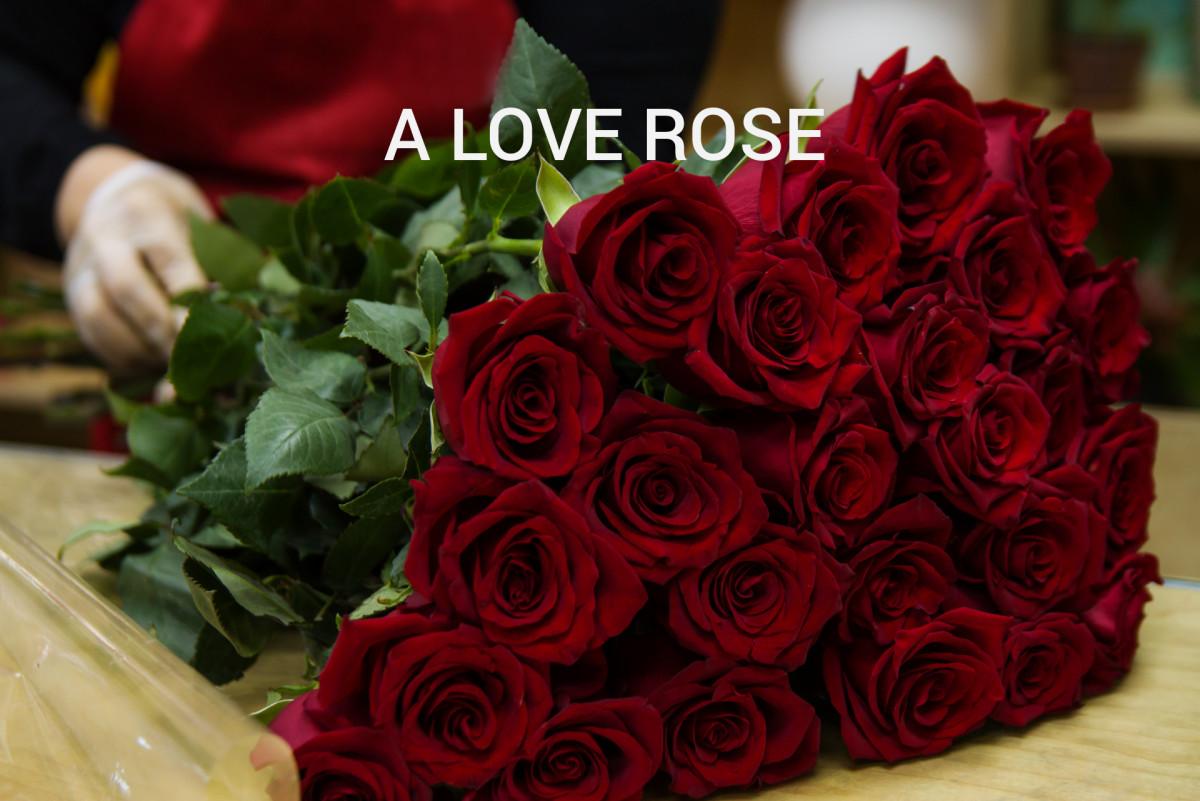 A Love Rose