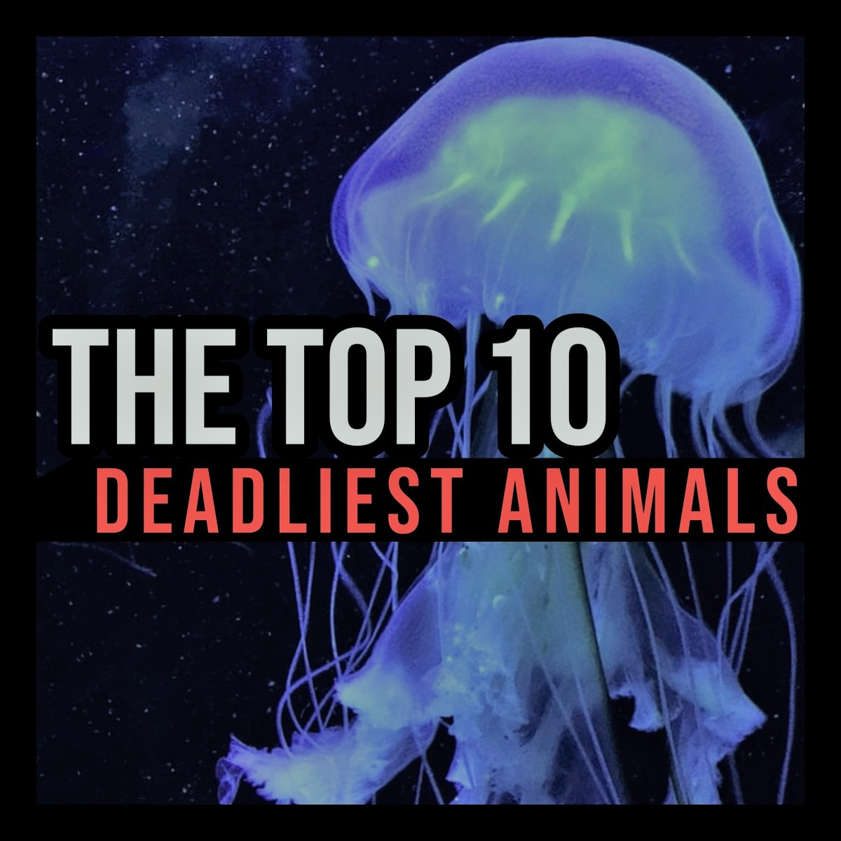 The Top 10 Deadliest Animals in the World