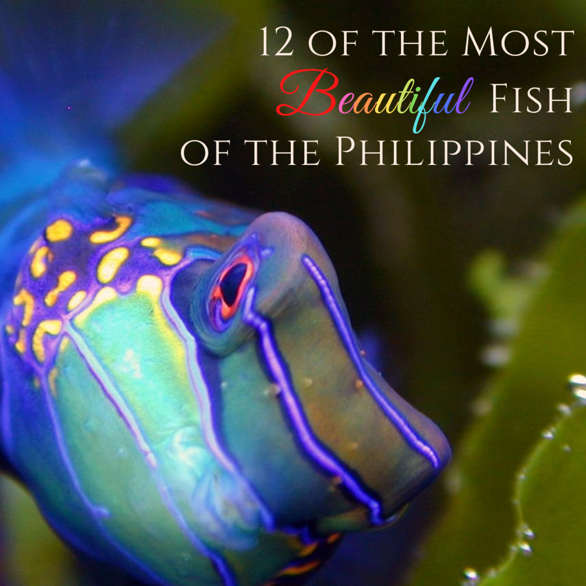 This article will list 12 of the most gorgeous and wonderful fish that live around the Philippine islands.